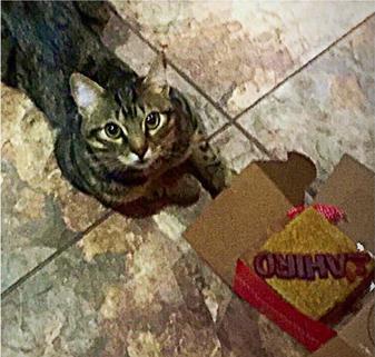 gato - diana arango