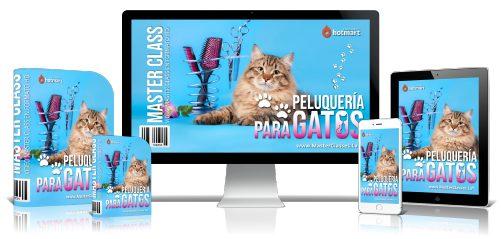 Curso de Peluquería para gatos