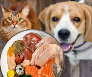 mejores alimentos comida para perros y gatos - mascotas