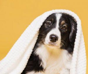 higiene y cuidado para perros y gatos