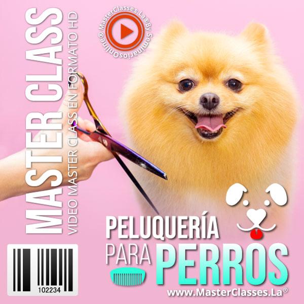 MasterSello - Curso Peluqueria Para Perros - MasterClasses